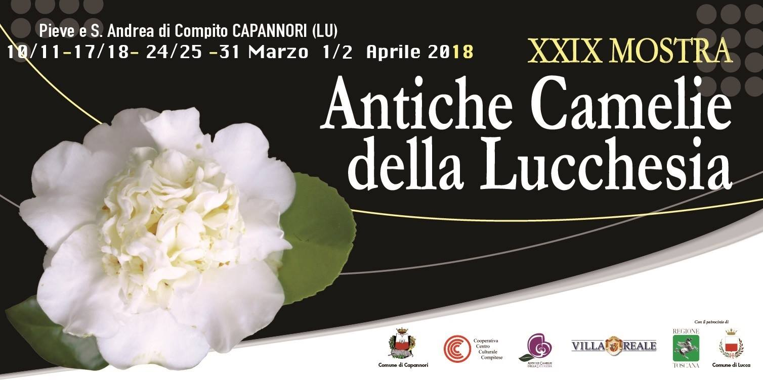camelie lucca 2018