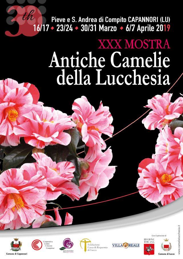 Mostra delle Camelie Lucca 2019
